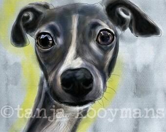 Italian greyhound, Iggy, iggy art, greyhound art print,  Galgos, Galgo Espagñol, Sighthound,   Dog Art print   10x14inch
