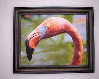 8 x 10 Flamingo Head Print