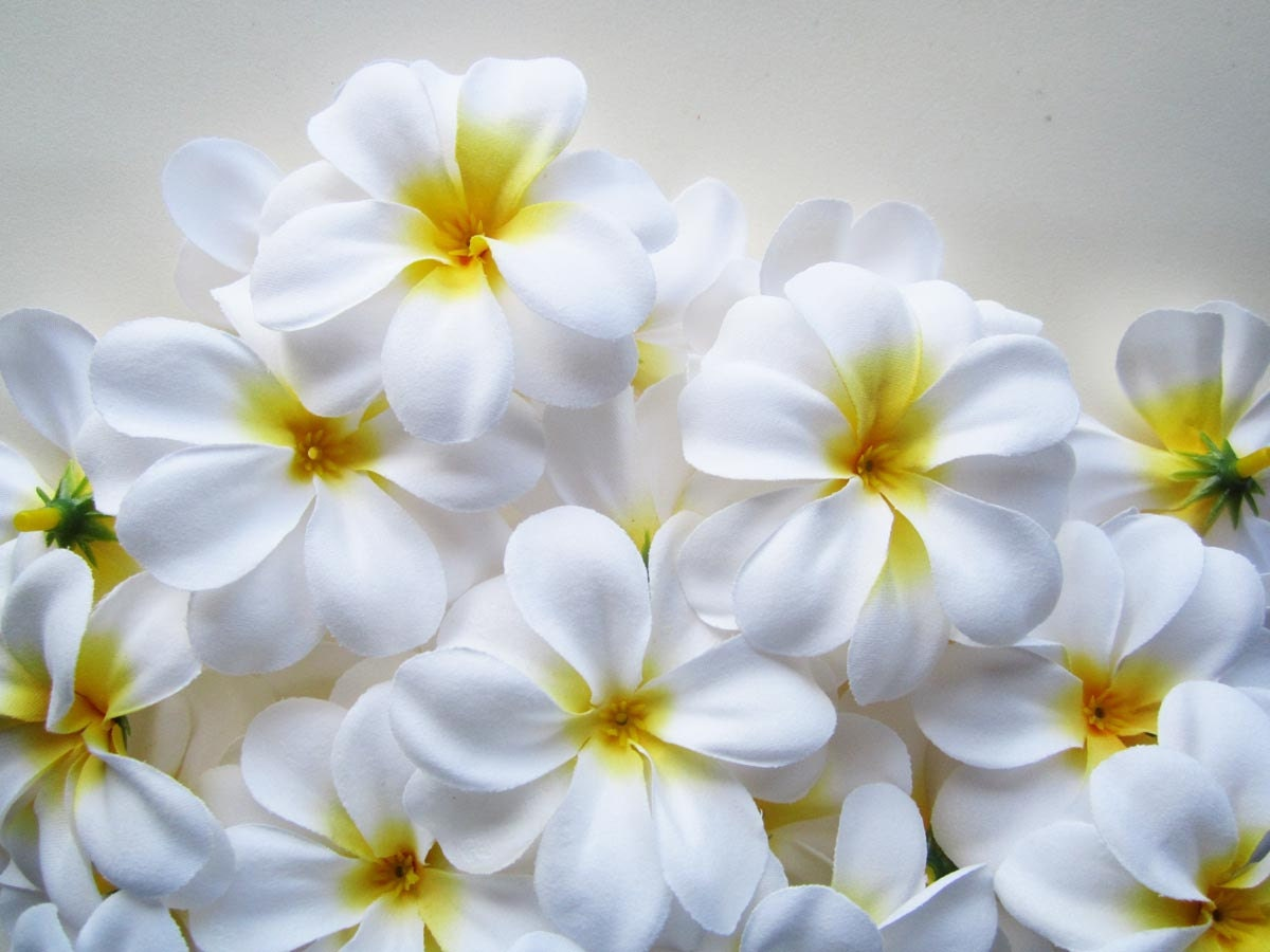 100 white plumeria frangipani heads artificial silk flower zoom izmirmasajfo Choice Image
