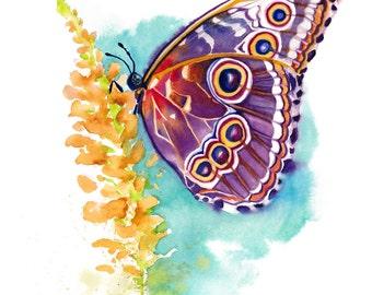 "8x10"" Butterfly Watercolor Giclee Fine Art Print [Watercolor Butterfly Portrait Print, Butterfly Print, Butterfly Art, Watercolor Art]"