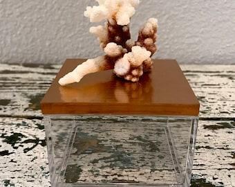 Vintage Coral and Acrylic Box