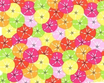 Dozens of Dollars Fabric - Michael Miller Fabric - Multi Beach Fabric - Michael Miller Discontinued - Bright Quilt Fabric - Sand Dollars