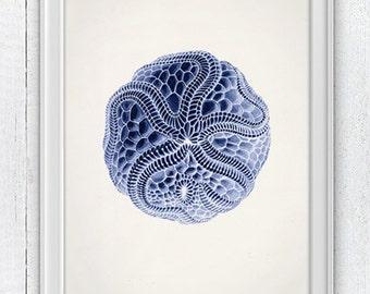 Jellyfish Cistoidea 01 in blue - Wall decor poster  , sea life print - Marine  sea life illustration A4 print SAS110