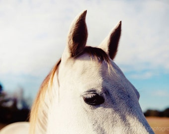 horse photography, white home decor, blue home decor, rustic farm decor, farm cottage chic, animal photography, All Ears I