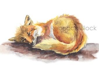 Sleeping Fox print (5x7)