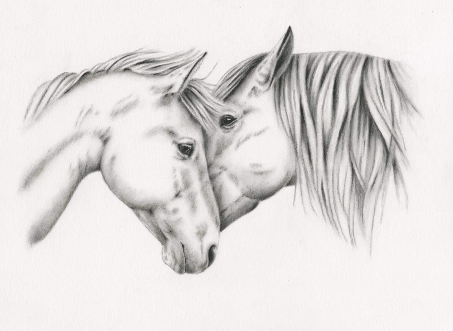 horse sketches