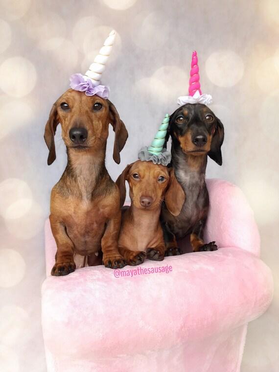 Mini Unicorn Headband for Dog || Pet Unicorn Costume || Dog Unicorn || Unicorn Dog