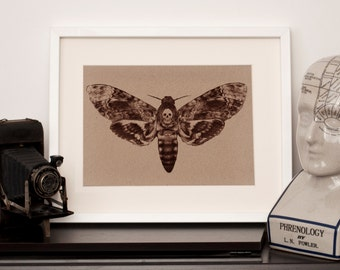 Death's Head Hawk Moth - A4 Art Print - Manila