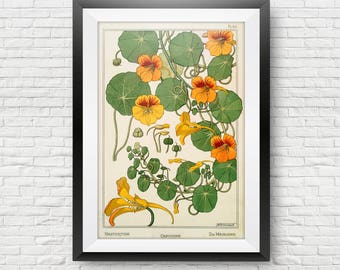 Vintage Botanical Print Nasturtium Plant Illustration Red Flower Watercolor Plant Art Print Mother's Day Gift for Her Traditional Decor