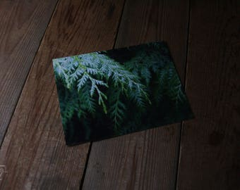 Cedar //  high quality photo print, proceeds help feed and care for local strays