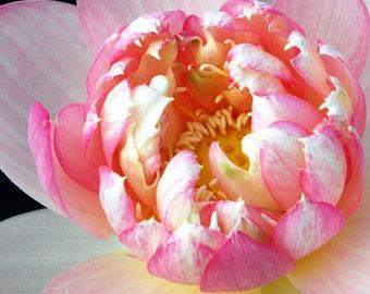Spring Flowers, Pink Flower Art, Cottage Decor Photograph,  Pink Lotus Flower, Fine Art Photograph 8 x 10 Wall Art Home Decor