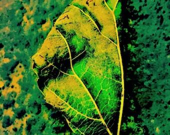 Leaf Transformed