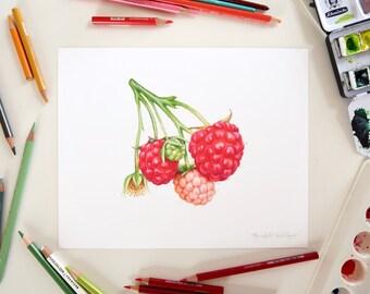Raspberries Illustration // 8x10 Realistic Food Art print