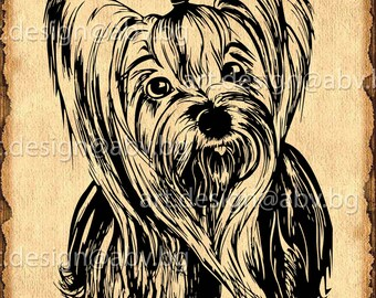 Vector DOG, yorkie, SVG, AI, png, pdf, eps, dxf, jpg Download, Digital image, graphical, animal, discount coupons