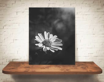 Flower Photograph - Fine Art Print - Black White Photo - Wall Art - Floral Decor - Wall Decor - Pictures of Flowers - Country Decor