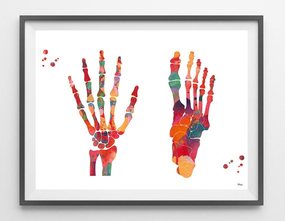 Foot And Hand Watercolor Print Skeletal System Poster Anatomy