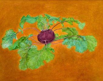 Purple Kohlrabi, Heirloom vegetable, watercolor print for kitchen or cottage decor