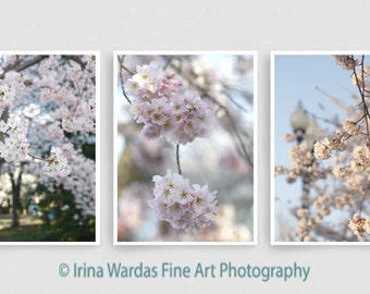Cherry blossom set, vertical Cherry blossom pictures, DC Japanese sakura photography wall art set 3 11x14, 12x18 spring tree photo print set