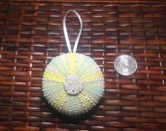 Sea Urchin Ornament 3 inch
