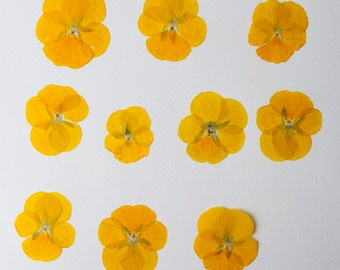 10 Dried Violas Yellow Dry pansy Craft Supplies Wedding Decorations Real flowers Embelishments Pansy Viola Wedding Decor, Yellow Viola