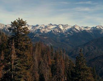 Sequoia Landscape