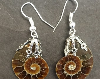 Ammonite Earrings on Sterling Silver wire