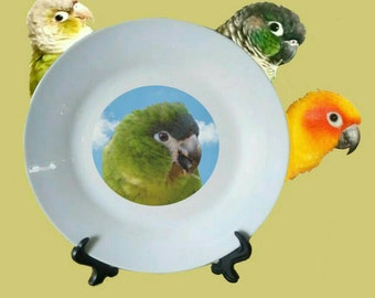"Hahn's Macaw Parrot Blue Sky Clouds White Decorative Ceramic 8"" Plate and Display Stand"