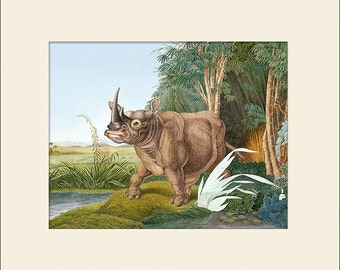 Rhinoceros Print, Aloys Zötl, Art Print with Mat, Note Card,  Natural History Illustration, Wall Art, Vintage Wall Decor, Animal Print