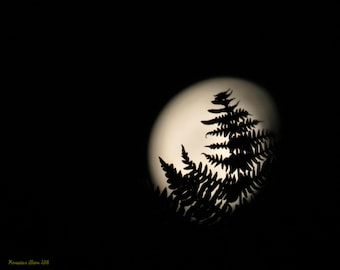 Moon in a Fern  11 x 14 Photograph Print
