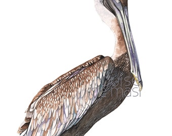 Pelican print of watercolor painting P2416. Contemporary coastal wall art, beach house wall art, nautical wall art, A3 size print