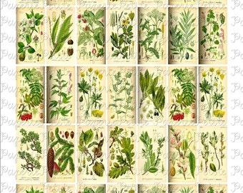 Floral and Leaf Botanical Digital Download Collage Sheet 1 x 2 inch