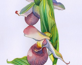 PRINT - Lady Slipper