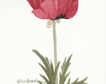 Red Poppy Original Watercolor 4