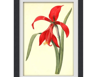 Botanical printable, red flower print,  digital botanical art poster, upcycled from bookplate Instant Download No24