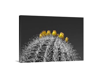 Cactus Art Print, Barrel Cactus, Desert Flower Picture, Arizona Gift, Tucson Picture, Sonoran Desert, Nature Photography, Black and White