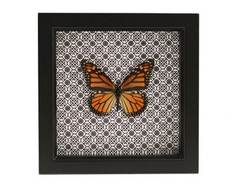 Framed Monarch Butterfly Damask Print Display