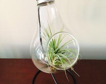 Air Plant Terrarium, Light Bulb Terraroum, Glass Terrarium, Beach Terrarium, Birthday Gift, Desk Warming Gift, Airplants