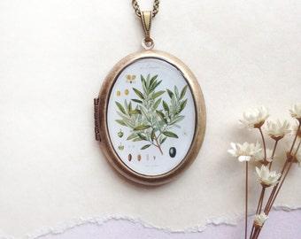 Botanical Olive Branch Locket - Vintage Plant Plate Illustration - Brass Photo Necklace