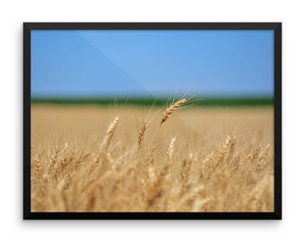 LowBeeTees Kansas Wheat Head Framed Poster