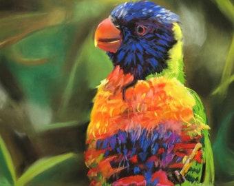 "Soft pastel ""Lorikeet after bathing"" - Pastel ""Lorikeet after bathing"" / / Birds, bird Art, Pastelmat, Rembrandt, animals"