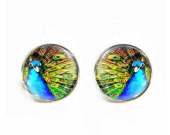 Peacock small post stud earrings Stainless steel hypoallergenic 12mm Gifts for her