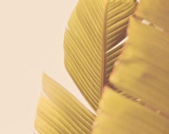 Palm Leaves - Summer Botanical Photograph Print