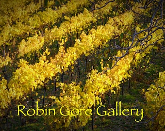 Autumn in the Vineyards - 05   (PRINT)