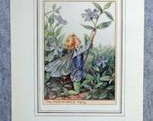 Periwinkle Flower Fairy V...
