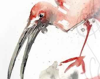 "Martinefa's Original watercolor and Ink ""Ibis"""