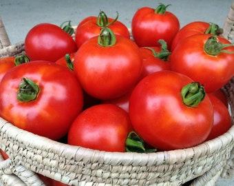 Heirloom Tomato Garden Seeds Non-gmo