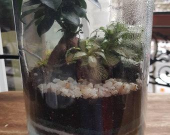 In large jar terrarium