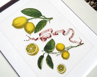 Botanical Lemon Naturalist Study 3 Archival Print