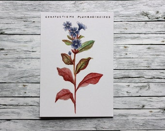 Postcard - Plumbago - Vintage Flowers - pen&alex