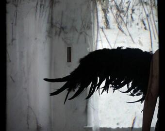 Wing - Original FIne Art Photograph